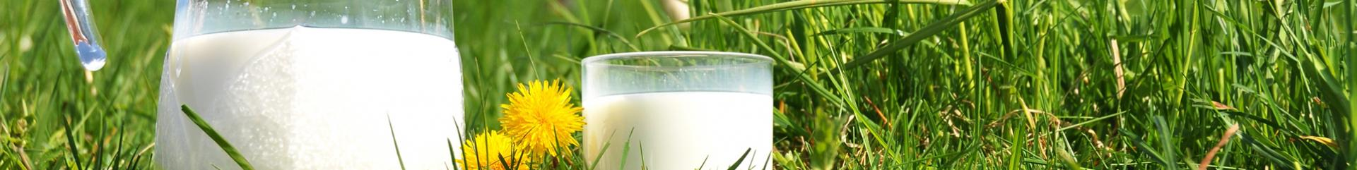 Wholesale milk dairy