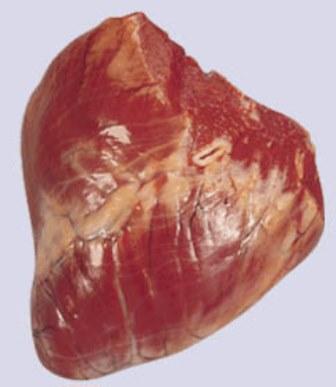 Beef offals heart - knh